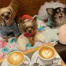 【清澄白河】iki Espresso(イキエスプレッソ)で愛犬と洗練されたコーヒータイムを