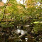 太田黒公園で紅葉ライトアップ 12/1(日)まで
