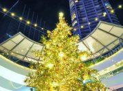 毎年恒例のクリスマスツリー巡りpart1@横浜駅周辺~みなとみらい