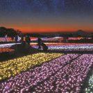 過去最大、100万球の心温まる イルミネーション「光の花園」@マザー牧場