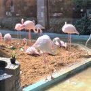【メヒコ守谷店】フラミンゴ見ながら美味しい料理!シーフードレストラン