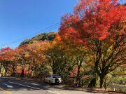 【霧島】今が見頃!霧島の紅葉ドライブで極彩色と美味を満喫!
