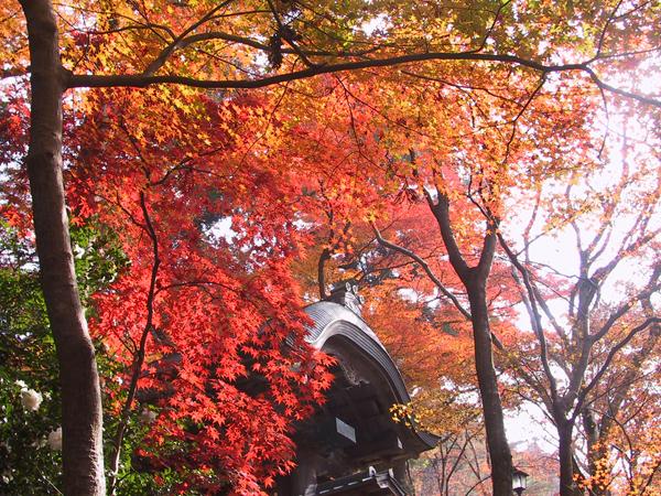 神戸・阪神間・姫路 紅葉スポット15選