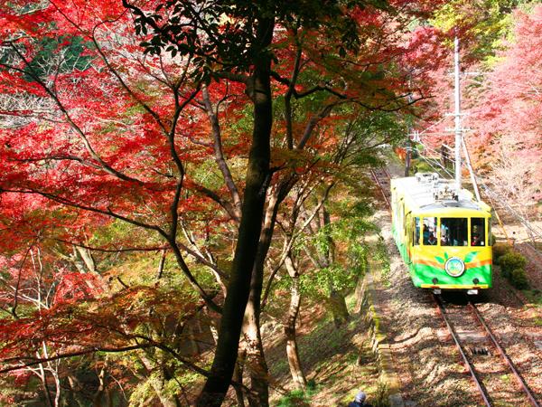 【特集】のんびりケーブルカーで行く「秋の高尾山へ」