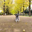 【立川・昭島】昭和記念公園「黄葉紅葉まつり2019」開催中♪