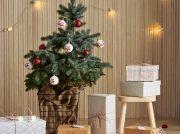 本物のモミの木が「IKEA港北」にやってきた☆ おいしいグルメフェアも見逃せない!