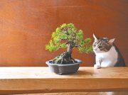 【岡山市北区】正月を飾るミニ盆栽展