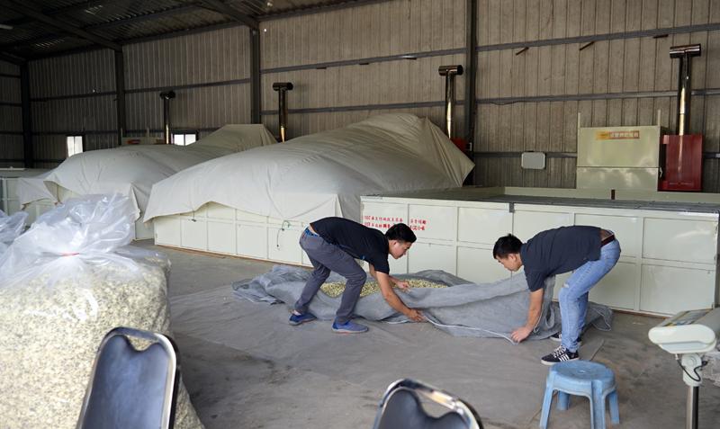 杭菊の乾燥機