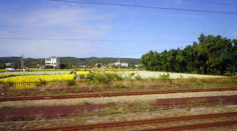 車窓から見えた台湾苗栗県銅鑼郷の杭菊畑