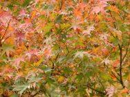 関内エリアで紅葉が楽しめる穴場スポット♪『横浜公園』の日本庭園