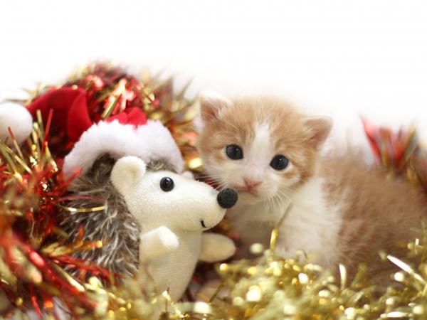 【クリスマスのトリビアクイズ】Amazonギフト2000円分が5人に当たる!