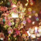 今週末からイベントも!クリスマスのスペシャルランチ・ディナーにお勧め「KAGOSHIMA Christmas Navi 」