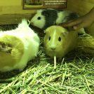 「イルミ&動物」ならマザー牧場! 夜なのにモルちゃんタッチ!