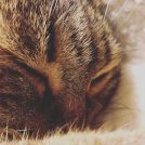 《のびのび寝るネコ》と《気遣って隅っこで寝る人間》