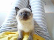 第3回猫とも新聞写真展「猫がいてよかった」1/26(日)まで