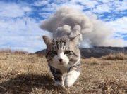 【写真展×音楽会】愛猫家にはたまらない 五感で猫の魅力を満喫
