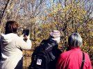 1/18(土)~2/9(日)、黄色い花と香りに誘われて「ロウバイまつり」
