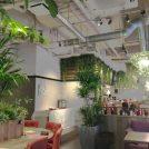 【名駅】緑いっぱいの落ち着き空間。ゆったりランチは「ボタニカルガーデン 猿カフェ」で